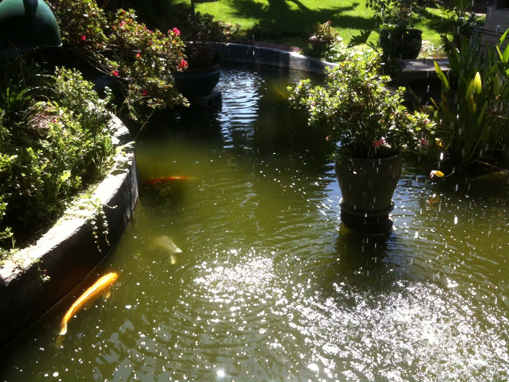 Koi pond at the entrance of Shanghai Red's